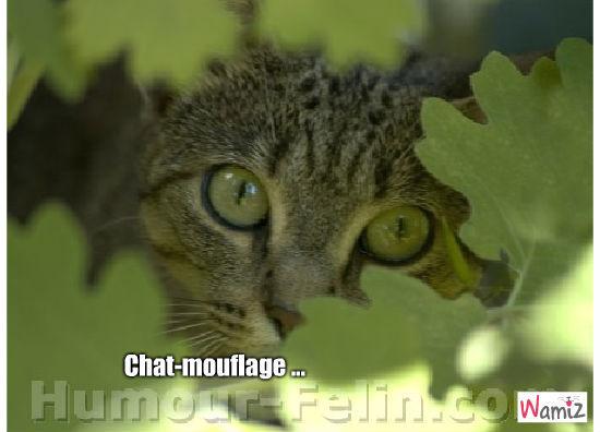Chat-mouflage, lolcats réalisé sur Wamiz