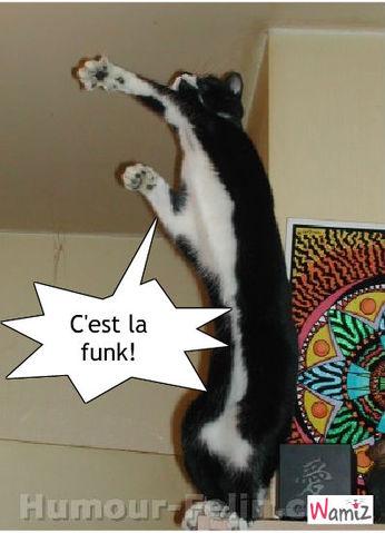 C'est la funk !, lolcats réalisé sur Wamiz