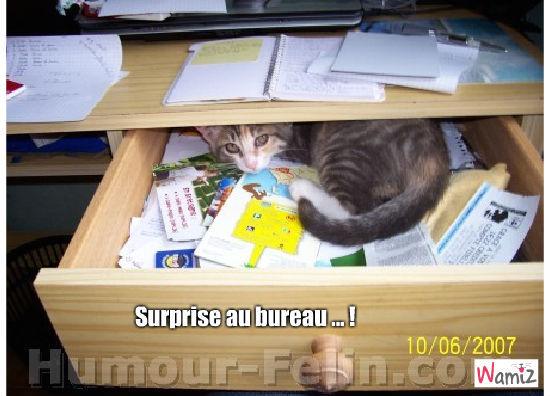 Une petite surprise au bureau !, lolcats réalisé sur Wamiz