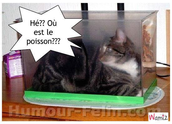 Chuis pas sencé être un poisson-chat , moi !, lolcats réalisé sur Wamiz