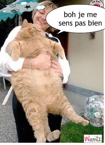 chat enorme, lolcats réalisé sur Wamiz