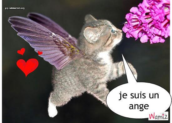 l'ange, lolcats réalisé sur Wamiz