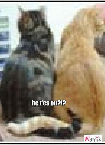 les deux chat, lolcats réalisé sur Wamiz