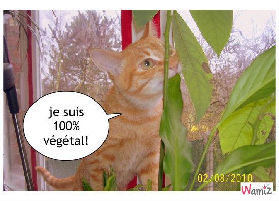 chat bio, lolcats réalisé sur Wamiz