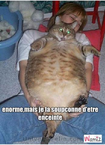 la gros chat, lolcats réalisé sur Wamiz