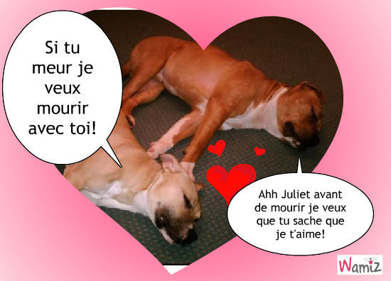 Roméo & Juliet, lolcats réalisé sur Wamiz