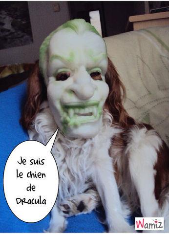 Douky le chien Dracula, lolcats réalisé sur Wamiz