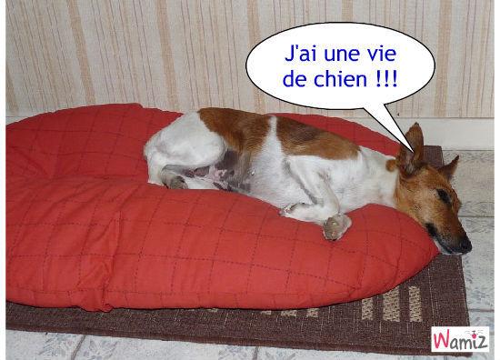 vanille et sa vie de chien, lolcats réalisé sur Wamiz