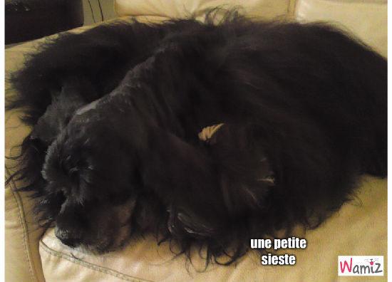 une petite sieste, lolcats réalisé sur Wamiz