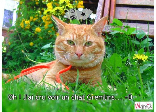 Chat Gremlins !, lolcats réalisé sur Wamiz