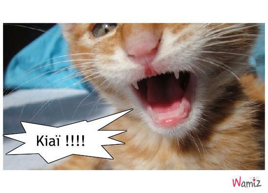 Kiaïïï !!!, lolcats réalisé sur Wamiz