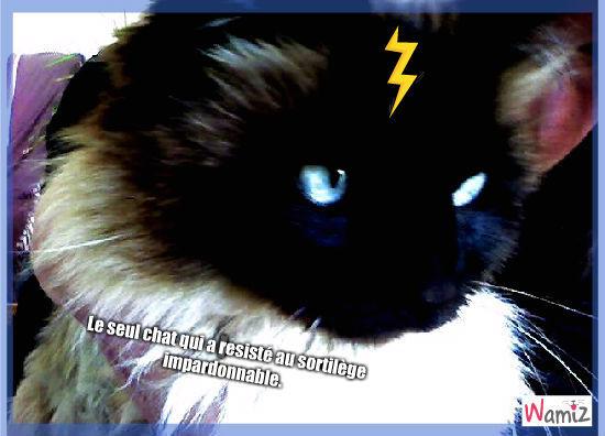 Pottercat, lolcats réalisé sur Wamiz