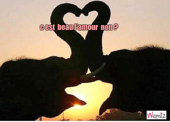 amour d éléphant, lolcats réalisé sur Wamiz