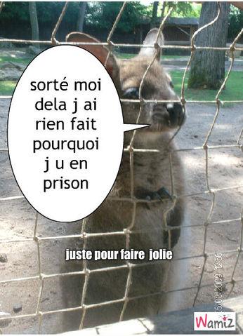 en prison, lolcats réalisé sur Wamiz