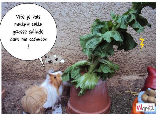 Daisy et la salade, lolcats réalisé sur Wamiz