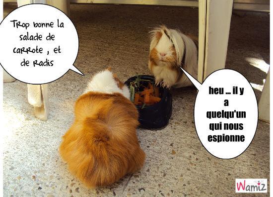 Douce et Daisy qui mangent, lolcats réalisé sur Wamiz