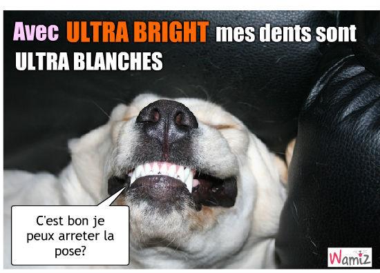 Dents plus blanches que blanches, lolcats réalisé sur Wamiz