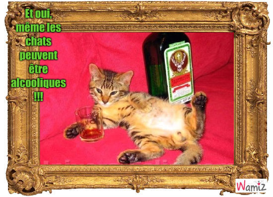 Alcoolique, lolcats réalisé sur Wamiz