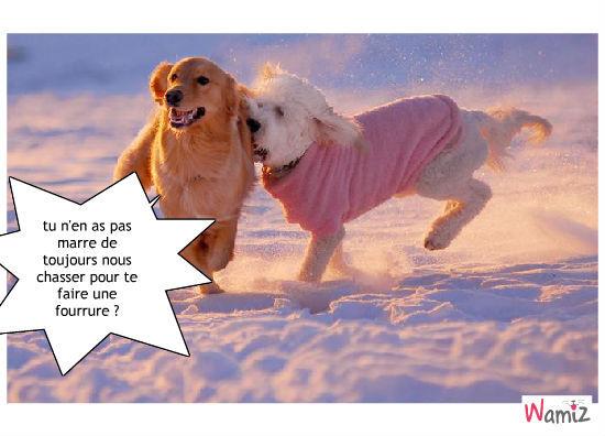 Fourrure de chien., lolcats réalisé sur Wamiz