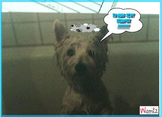 la douche, lolcats réalisé sur Wamiz