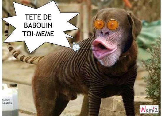 Tronche de babouin, lolcats réalisé sur Wamiz