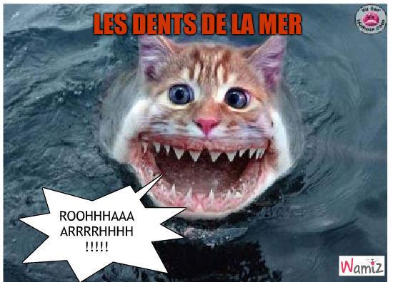 les dents de la mer, lolcats réalisé sur Wamiz