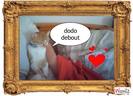 mdr le chat, lolcats réalisé sur Wamiz