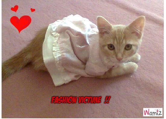Fashion victim, lolcats réalisé sur Wamiz