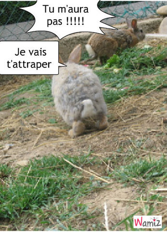 le loup-lapin, lolcats réalisé sur Wamiz