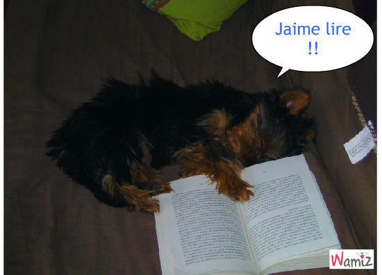 Jaime lire , lolcats réalisé sur Wamiz