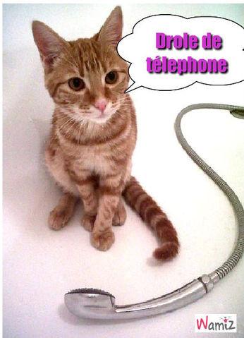 Le chat et le télephone, lolcats réalisé sur Wamiz
