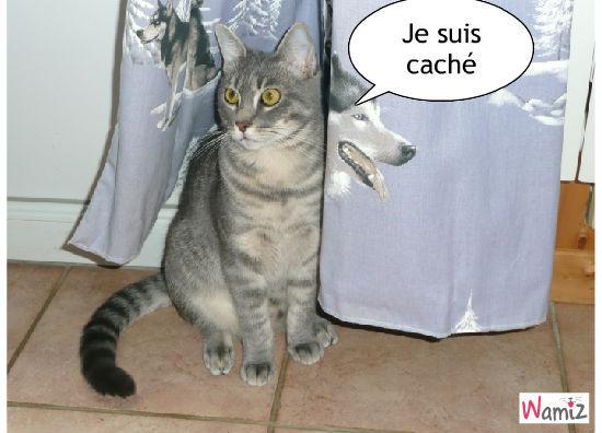 PARTIE DE CACHE CACHE, lolcats réalisé sur Wamiz
