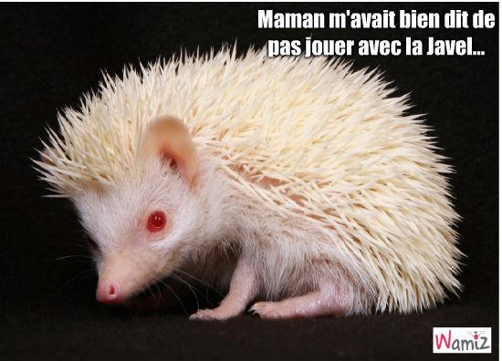Hérisson albinos, lolcats réalisé sur Wamiz