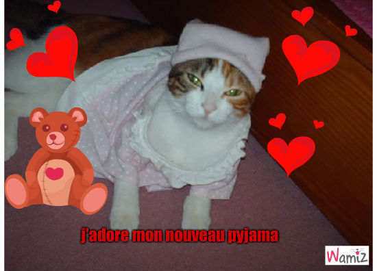 pyjama, lolcats réalisé sur Wamiz