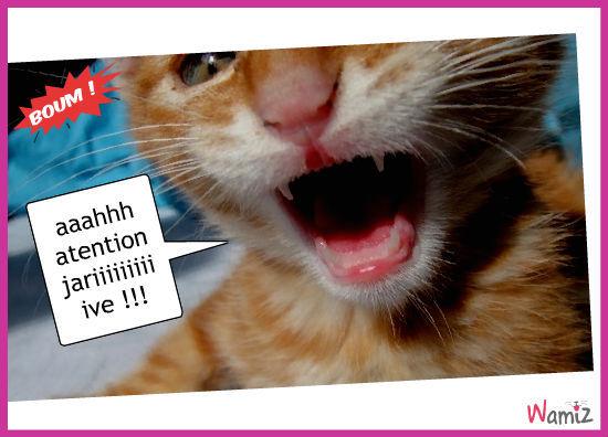 chaton, lolcats réalisé sur Wamiz