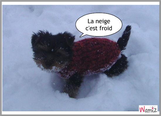 La premiere foid dans la neige !, lolcats réalisé sur Wamiz