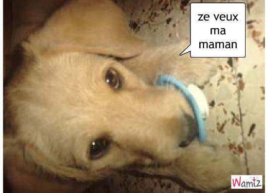 chien à la tétine, lolcats réalisé sur Wamiz