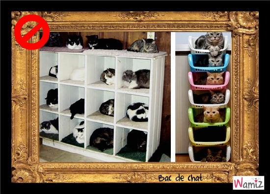 bac de chat, lolcats réalisé sur Wamiz