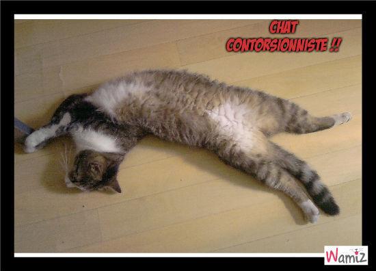 chat contorsionniste, lolcats réalisé sur Wamiz