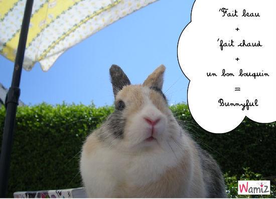 Bunnyful, lolcats réalisé sur Wamiz
