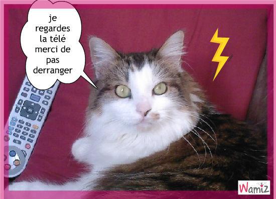 un chat merveilleux, lolcats réalisé sur Wamiz