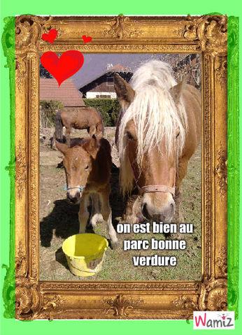 mes trois chevaux, lolcats réalisé sur Wamiz