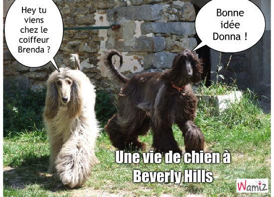 Beverly Hills, lolcats réalisé sur Wamiz