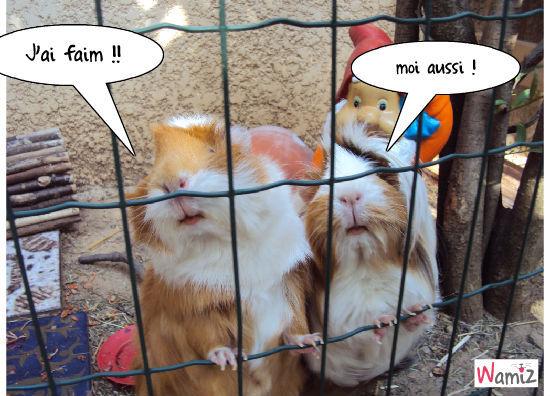 Douce et Daisy , lolcats réalisé sur Wamiz