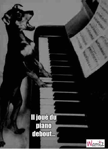 pianiste libre, lolcats réalisé sur Wamiz