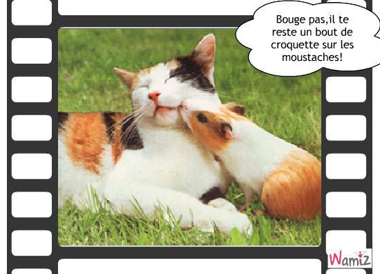 chat et cochon d'inde, lolcats réalisé sur Wamiz
