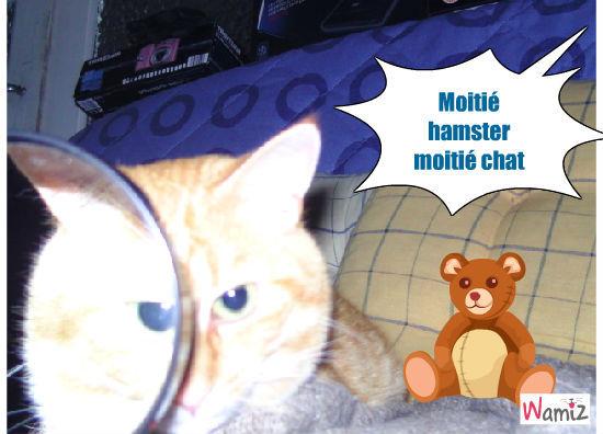 Chat ou hamster ?, lolcats réalisé sur Wamiz