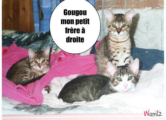 Les trois petits, Gougou, Pupuce et Ronron (décédé à 8 mois), lolcats réalisé sur Wamiz