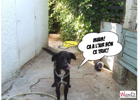 Miam!, lolcats réalisé sur Wamiz