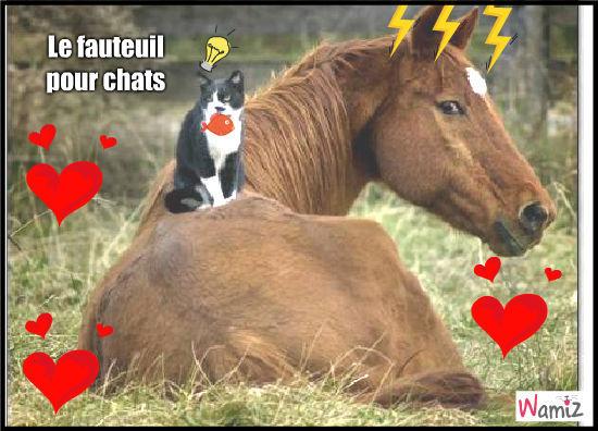 Le fauteuil pour chats, lolcats réalisé sur Wamiz